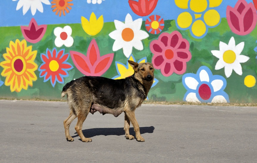 stray dog and painted wall